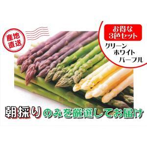 【C-3】士別産:おがた農園直送品 おがたさんちの3色アスパラセット 2L〜L込・約1kg入・1箱(グリーン600g・ホワイト200g・パープル200g)|saijo
