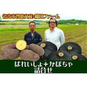 産直品 B-4 名寄市智恵文産:鷲田ファーム ばれいしょ+かぼちゃ詰合せ saijo