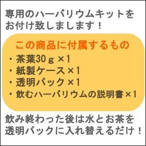 ハーバリウムティー・カーネーション30g 飲めるハーバリウム 植物標本 ドライフラワー インテリア 花 お茶|saika|03