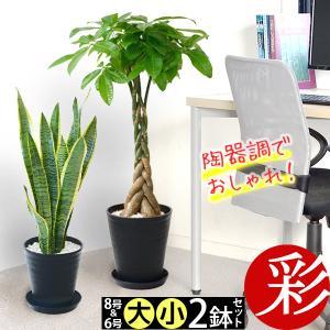 送料無料 観葉植物 8号+6号 2鉢セット セラアート鉢 ブラックポット パキラ ウンベラータ 幸福の木 ドラセナ 通販