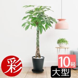 観葉植物 人気のパキラ 10号、シックな...