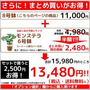 観葉植物 人気のアレカヤシ 8号鉢カバーセット 送料無料|saisyokukenbi|02