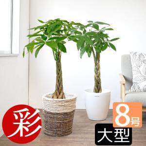 観葉植物 パキラ 8号鉢 鉢カバー 付き セット 大型 室内用 インテリア おしゃれ 通販 人気