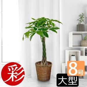 観葉植物 パキラ 8号鉢 大型 室内用 インテリア おしゃれ 通販 人気