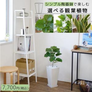 送料無料 スクエア ホワイト ポット シリーズ 観葉植物