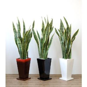 送料無料 サンスベリア・ローレンティー 選べる3色シンプルなスクエア陶器 観葉植物 父の日|saisyokukenbi
