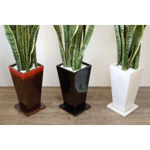 送料無料 サンスベリア・ローレンティー 選べる3色シンプルなスクエア陶器 観葉植物 父の日|saisyokukenbi|05