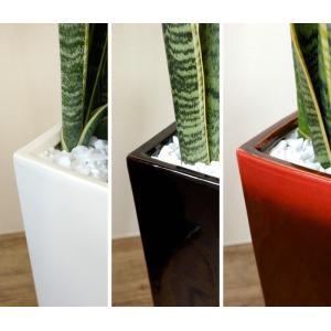 送料無料 サンスベリア・ローレンティー 選べる3色シンプルなスクエア陶器 観葉植物 父の日|saisyokukenbi|06