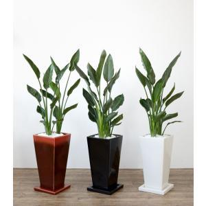 送料無料 ストレリチア・レギネ 選べる3色シンプルなスクエア陶器 観葉植物 父の日|saisyokukenbi