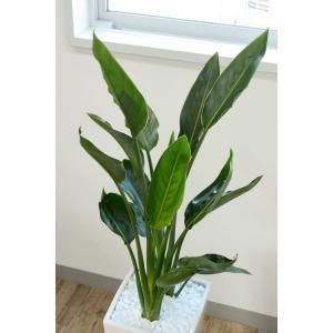 送料無料 ストレリチア・レギネ 選べる3色シンプルなスクエア陶器 観葉植物 父の日|saisyokukenbi|04