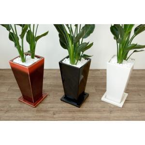 送料無料 ストレリチア・レギネ 選べる3色シンプルなスクエア陶器 観葉植物 父の日|saisyokukenbi|05