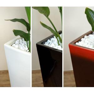 送料無料 ストレリチア・レギネ 選べる3色シンプルなスクエア陶器 観葉植物 父の日|saisyokukenbi|06