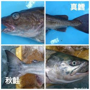 岩手県産 真たら 1本分切身(生)真たら白子セット 鮮魚 sakanayasan-gokko