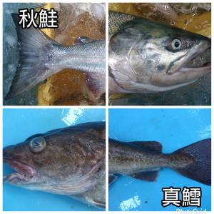 岩手県産 秋鮭(おす銀毛)1本分切身(生)鮮魚 鮭 sakanayasan-gokko