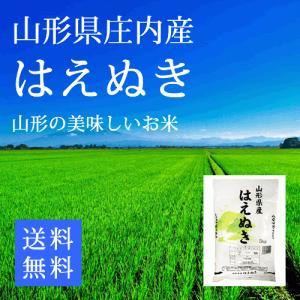 新米 はえぬき 山形県庄内産 精米5kg 令和2年産米 sakata-souko