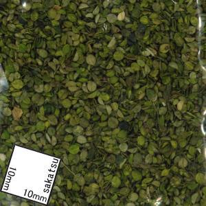 小さい緑の葉 :ジョーフィクス 素材 ノンスケール 116|sakatsu