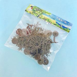 24-369 広葉樹の幹(小) 約3〜5cm 24本入り :カトー 素材 ノンスケール|sakatsu