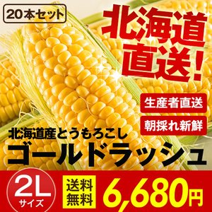 北海道産 朝採れとうもろこし ゴールドラッシュ(一番果) 2Lサイズ×20本セット|sakenosakana