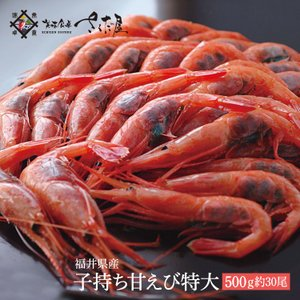 越前産 子持ち甘えび 特大サイズ 500g 約30尾 甘エビ 卵【冷凍便】