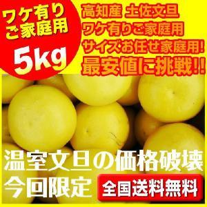 ハウス土佐文旦5キロ入6〜16玉で玉数おまかせ  沖縄県と離島は別途1000円配送料がかかります
