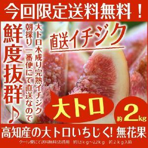 完熟イチジク約1.5−2kg入 高知産 8月中下旬頃より発送 北海道、沖縄県とその他の離島は発送不可