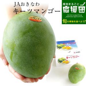 送料無料 沖縄県より産地直送 JAおきなわ キーツマンゴー 約800g 化粧箱 まんごー|sanchimarugotoouen