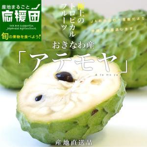 沖縄県より産地直送 JAおきなわ アテモヤ LからSサイズ 約1.8キロ (6玉から10玉) あてもや トロピカル|sanchimarugotoouen