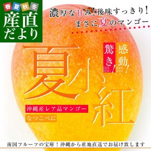沖縄県より産地直送 JAおきなわ 新品種マンゴー 夏小紅(なつこべに)2Lから4Lサイズ 優品 約2キロ (4玉から5玉入) 送料無料|sanchimarugotoouen