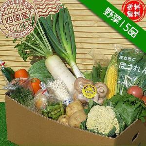 安心・安全な四国産の朝もぎ新鮮野菜15品セット/送料無料