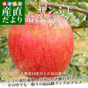 長野県より産地直送 JAながの飯綱地区 サンふじ 最高等級:グルメ 5キロ (16玉から18玉) 送料無料 林檎 りんご リンゴ|sanchokudayori