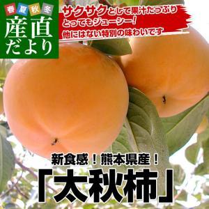 送料無料 熊本県より産地直送 JAあしきた 太秋柿 3.5キロ (8玉から14玉)