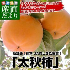 熊本県より産地直送 JAあしきた 太秋柿 2キロ(5玉から6玉) 送料無料 柿 かき|sanchokudayori