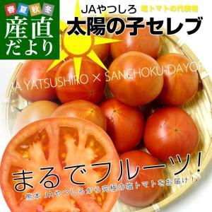 熊本県より産地直送 JAやつしろ 太陽の子セレブ フルーツトマト 約1キロ LからSサイズ(9玉から16玉) 送料無料 とまと|sanchokudayori