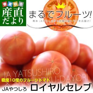 熊本県より産地直送 JAやつしろ フルーツトマト ロイヤルセレブ 約1キロ MからSサイズ(11から16玉) 送料無料 とまと|sanchokudayori