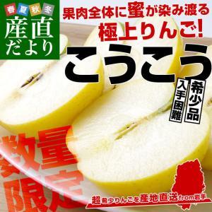 岩手県より産地直送 JAいわて中央 こうこう 5キロ (14から20玉) 送料無料 林檎 りんご リンゴ|sanchokudayori
