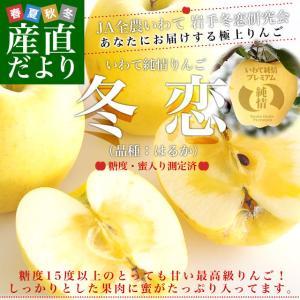 岩手県より産地直送 JA全農いわて いわて純情りんご 冬恋(品種:はるか) 約2.5キロ (7から10玉) 送料無料 林檎 りんご リンゴ|sanchokudayori