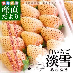 熊本県より産地直送 西谷農園の白いちご 淡雪(あわゆき) Lサイズ以上 約540g(270g×2P(8粒から15粒×2P))苺 イチゴ 送料無料|sanchokudayori