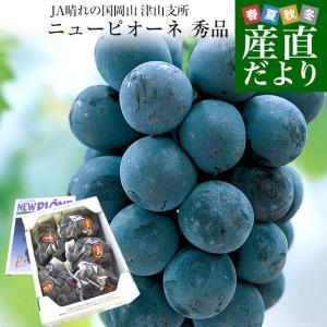 送料無料 岡山県より産地直送 JAつやま ニューピオーネ 秀品 約2キロ (4房から5房) 露地栽培 葡萄 ぶどう ブドウ|sanchokudayori