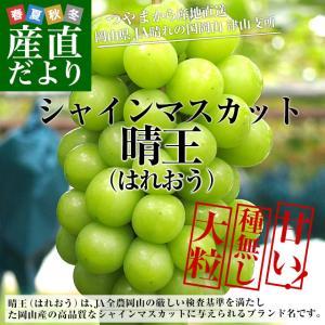 送料無料 岡山県より産地直送 JAつやま シャインマスカット 秀品 2キロ(3房から5房) ブドウ 葡萄 ぶどう|sanchokudayori