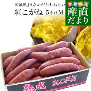 茨城県より産地直送 JAなめがたしおさい さつまいも「熟成紅こがね」 Mサイズ 約5キロ(18本前後) 送料無料 行方 薩摩芋|sanchokudayori