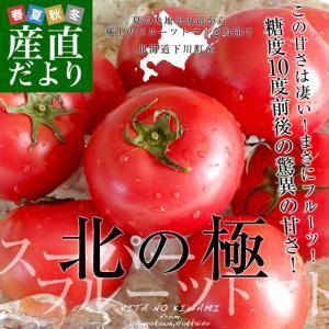 北海道より産地直送 下川町のスーパーフルーツトマト <北の極> 秀品 約800g LからSサイズ(8玉から15玉)送料無料 とまと|sanchokudayori