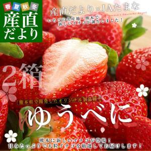 熊本県より産地直送 JAたまな 新品種のいちご ゆうべに 秀品 たっぷり2箱1080g (合計24粒から40粒)(540g×2箱) 送料無料 ユウベニ 玉名 農協苺 イチゴ|sanchokudayori