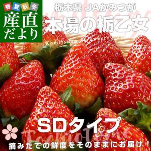 栃木県より産地直送 JAかみつが 本場の栃乙女 SD 320g×2P (12粒から15粒×2P) いちご イチゴ 苺 送料無料 上都賀|sanchokudayori