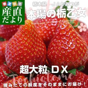 栃木県より産地直送 JAかみつが 本場の栃乙女 3L超級の超大粒 1キロ (12粒から15粒×2P) いちご イチゴ 苺 送料無料 上都賀|sanchokudayori