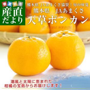 熊本県から産地直送 JAあまくさ 天草ポンカン 2LからMサイズ 10キロ (65玉から96玉前後) 送料無料 柑橘 ぽんかん|sanchokudayori