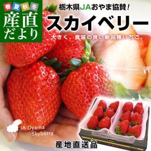 栃木県より産地直送 JAおやま スカイベリー 約300g×2P(6から12粒×2P) 送料無料 いちご イチゴ 苺  ※クール便発送|sanchokudayori
