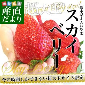 栃木県より産地直送 JAおやま スカイベリー 超大粒 1箱 300g×2P (5粒から6粒×2P) いちご イチゴ ※クール便|sanchokudayori