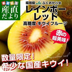 福岡県より産地直送 JAふくおか八女 レインボーレッドキウイ 約800g (9玉)