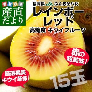 送料無料 福岡県より産地直送 JAふくおか八女 レインボーレッドキウイ 約1.35キロ(15玉)