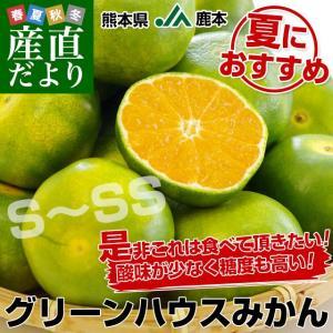 熊本県より産地直送 JA鹿本 グリーンハウスみかん SからSSサイズ 約2.5キロ(32玉から40玉前後)化粧箱入り ミカン 蜜柑 送料無料|sanchokudayori
